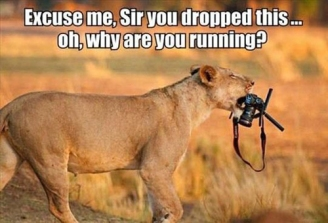 excuse-me-sir-you-dropped-this-oh-why-are-you-running-lion.jpg